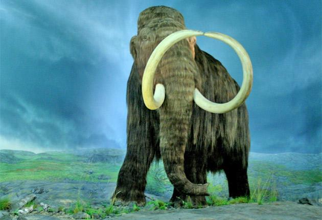 Around 60 tonnes of legal ivory from mammoths' tusks found in the Russian tundra is transported to China via Hong Kong each year
