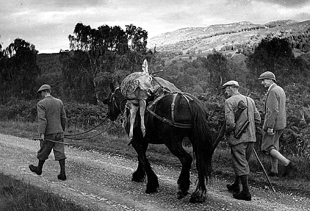 The way it was: Deer stalkers in the Highlands leading a horse carrying the carcass of a deer back to their lodge near Inverness in 1943