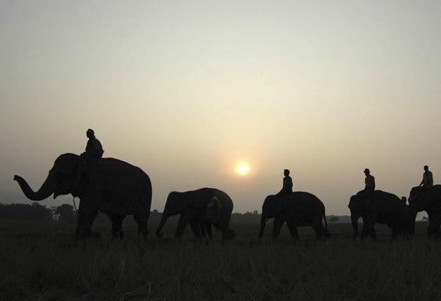 Indian officials believe elephant smuggling is driven by rich men who want trophy pets