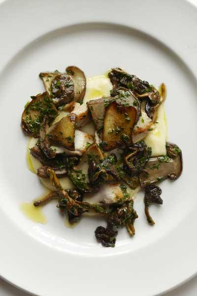 Whipped potato with rabbit and wild mushrooms