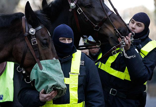 Police officers tend to their horses as they prepare for a large student protest near Parliament