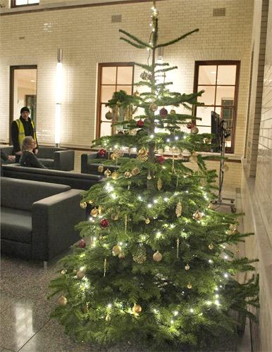 The Treasury Christmas tree, complete with hand-placed star