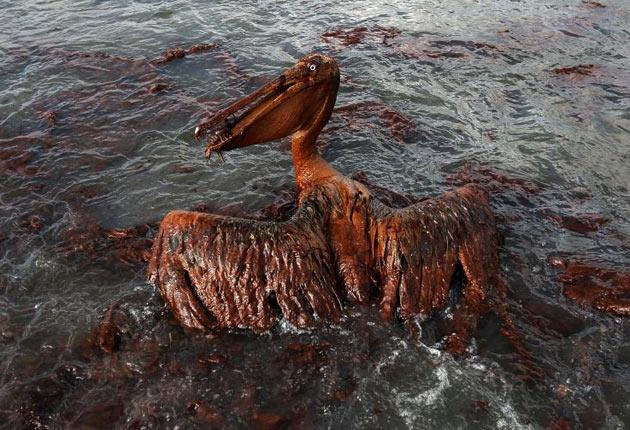 BP still has to pay for the environmental disaster from the Gulf oil spill