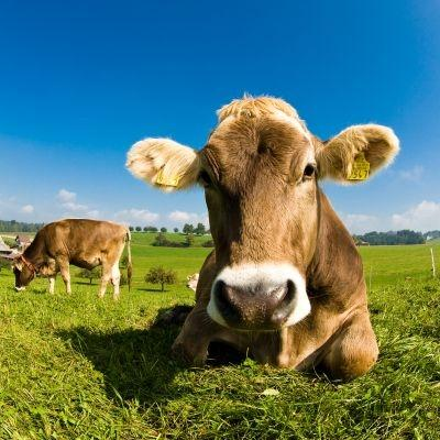 The WWF recommends eating less meat in order to reduce greenhouse gas emissions.