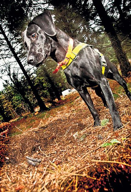 Conservation tails: dogs like Luna are helping to sniff out rare newts and toads