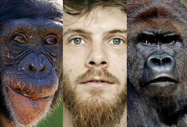 For the first time scientists have drawn a comprehensive family tree of all living species of primates