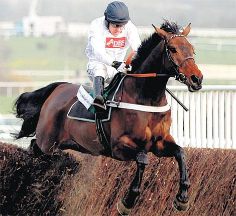Finian's Rainbow could go one better than his bold display in the Arkle Trophy last