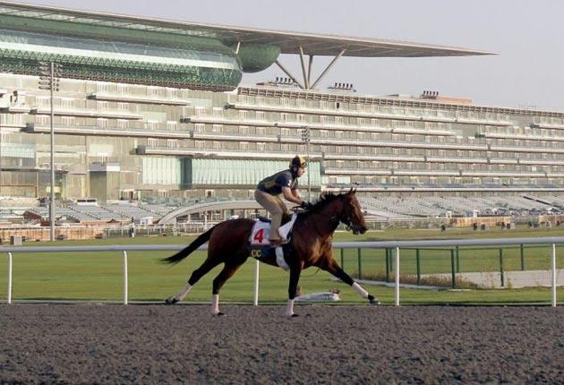 The US challenger Gio Ponti works on the track at Meydan in preparation for the Dubai World Cup today