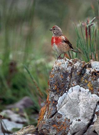 The area around Clee Hills is home to rare birds such as the linnet