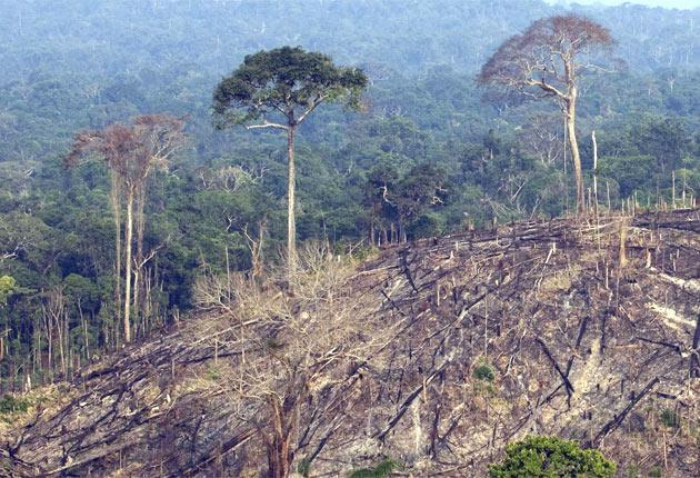 A deforested sector of the Amazon forest in the state of Para, in northern Brazil