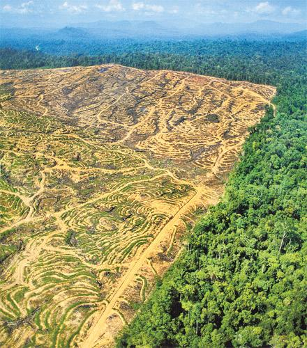 An area that has been cleared of rainforest to make way for a palm oil plantation in Sabah, Malaysia