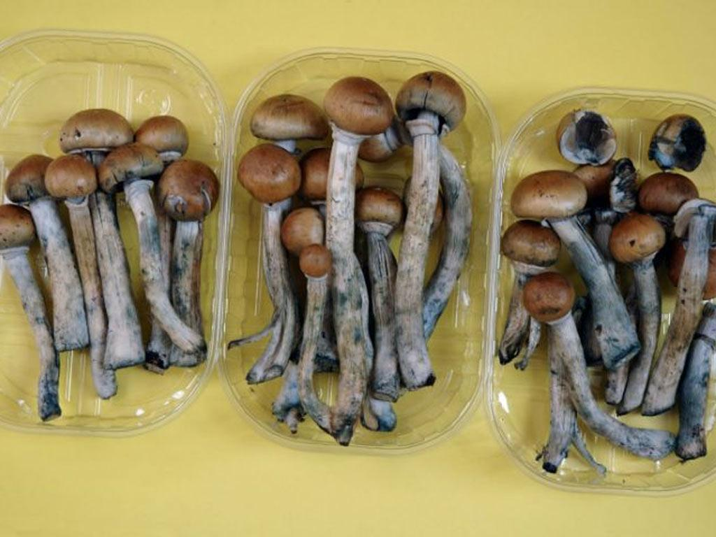 Magic mushrooms can have a lasting positive effect on personality