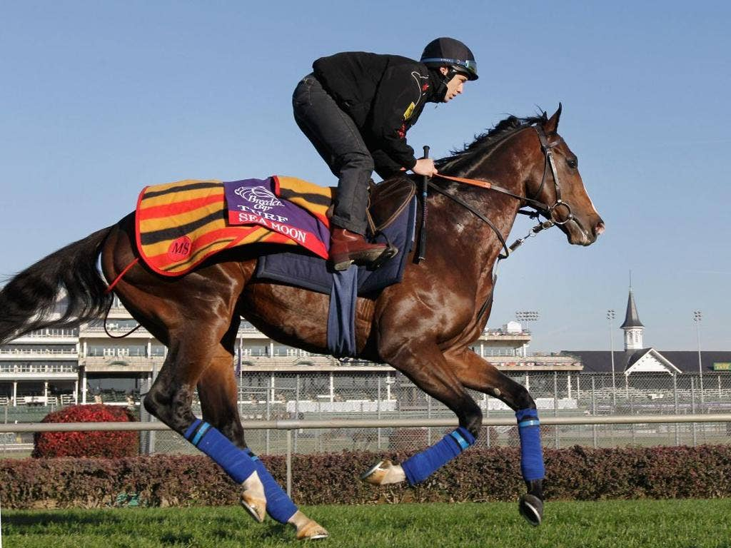 Breeders' Cup hopeful Sea Moon gallops over the turf course at Churchill Downs
