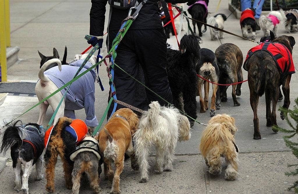 Do animals have souls? A dogwalker in New York