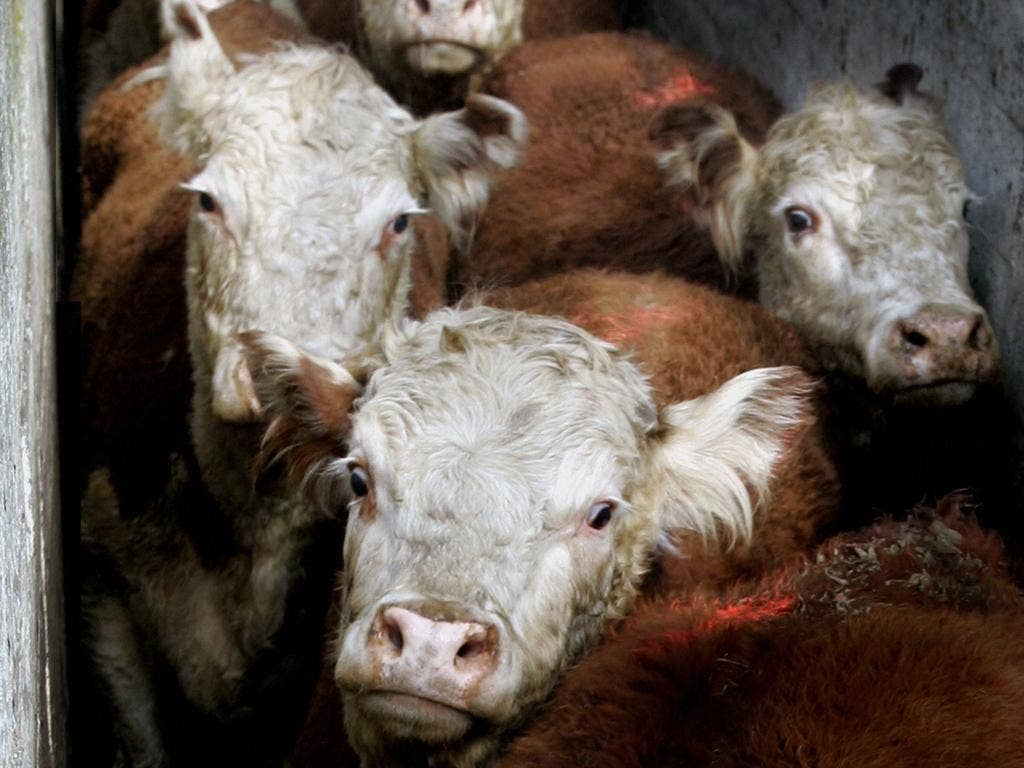 Fresh meat tops the list for the amount of carbon emissions