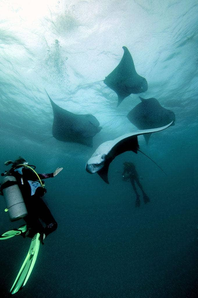 The mantas approach the divers