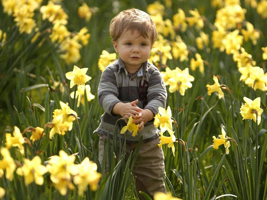 Let children play outside and pick flowers, the National Trust says