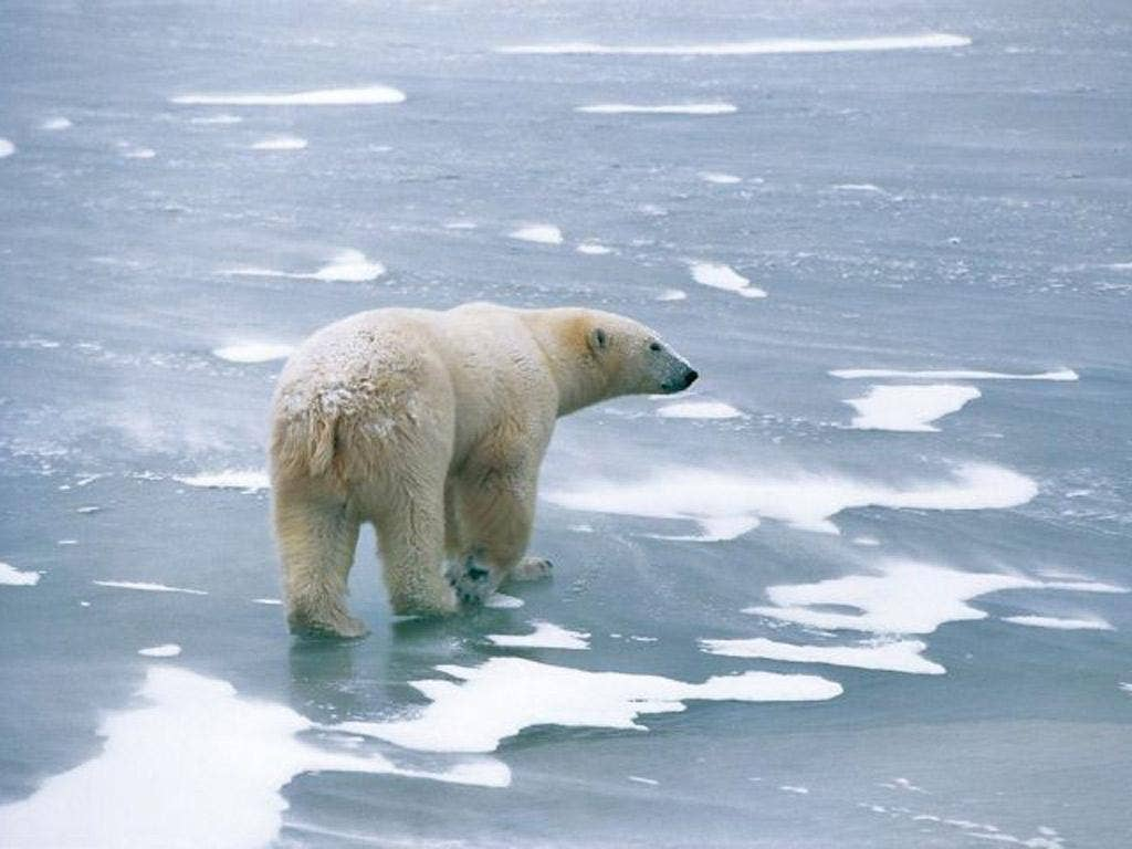 """Greenpeace wants to have a million names on an """"Arctic Scroll"""" which it will plant on the seabed beneath the North Pole"""