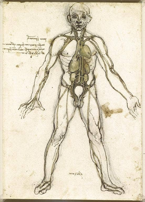 The body beautiful: 'The Major Organs and Vessels' (c1485-90)
