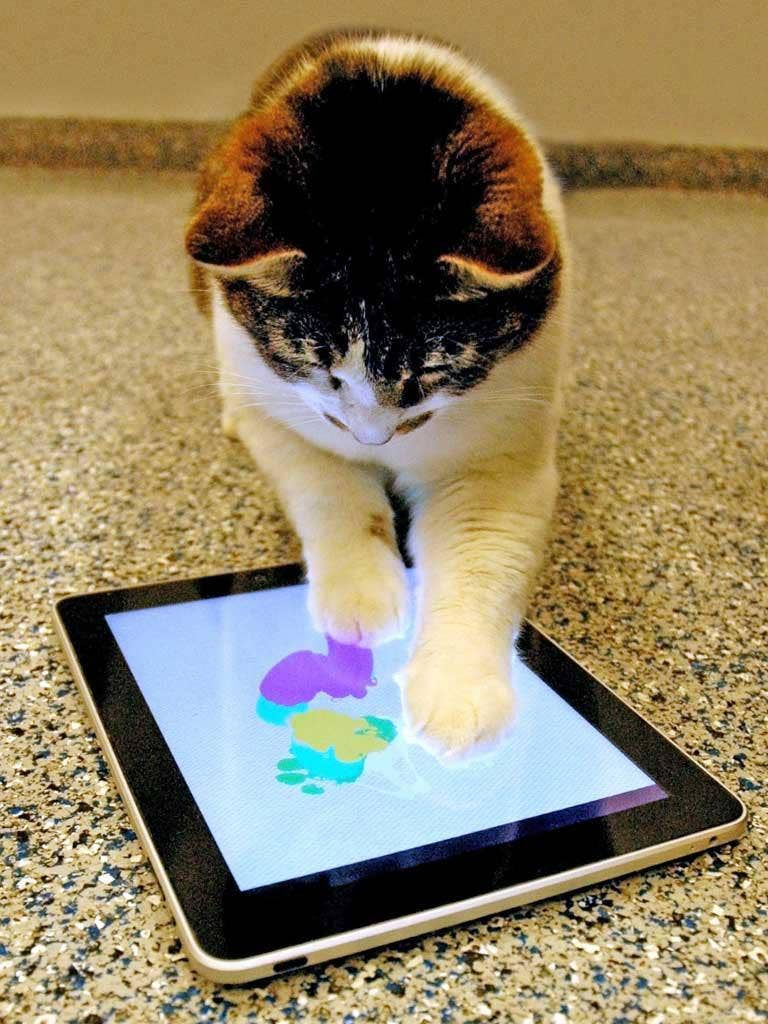 Monkey see, monkey iPad 2: Cats are able to play with tablet devices