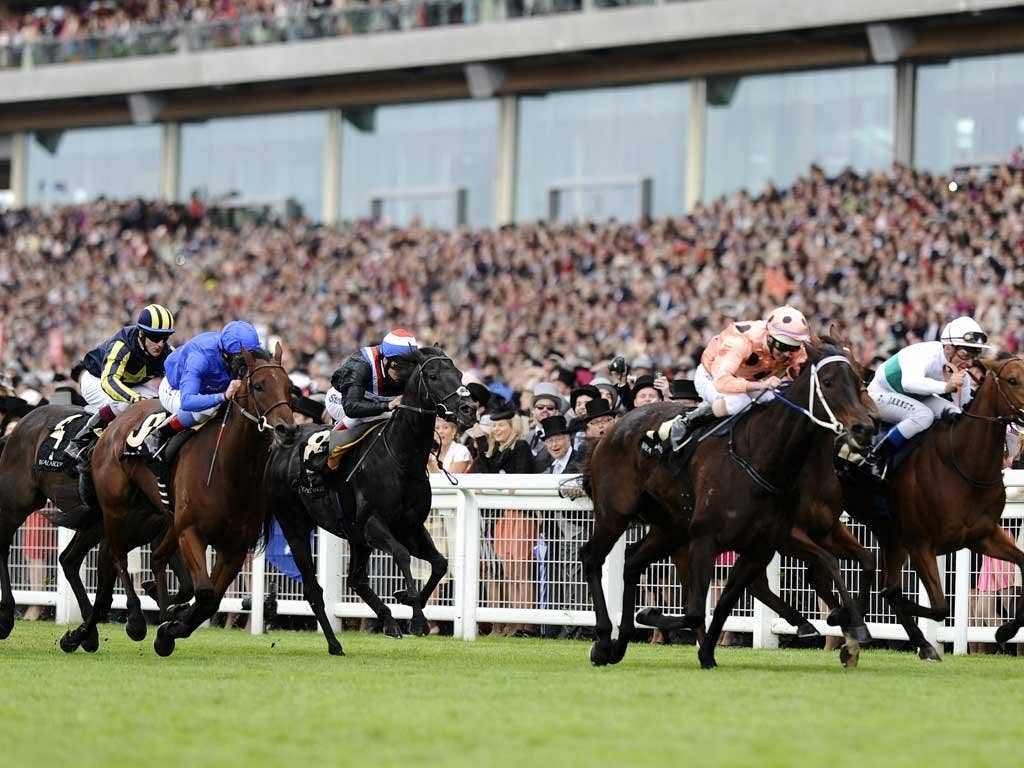 Pilot Error: Luke Nolen pushes Black Caviar (pink colours) all out for victory at Royal Ascot after earlier errors