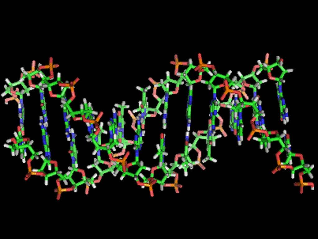 A section of human DNA