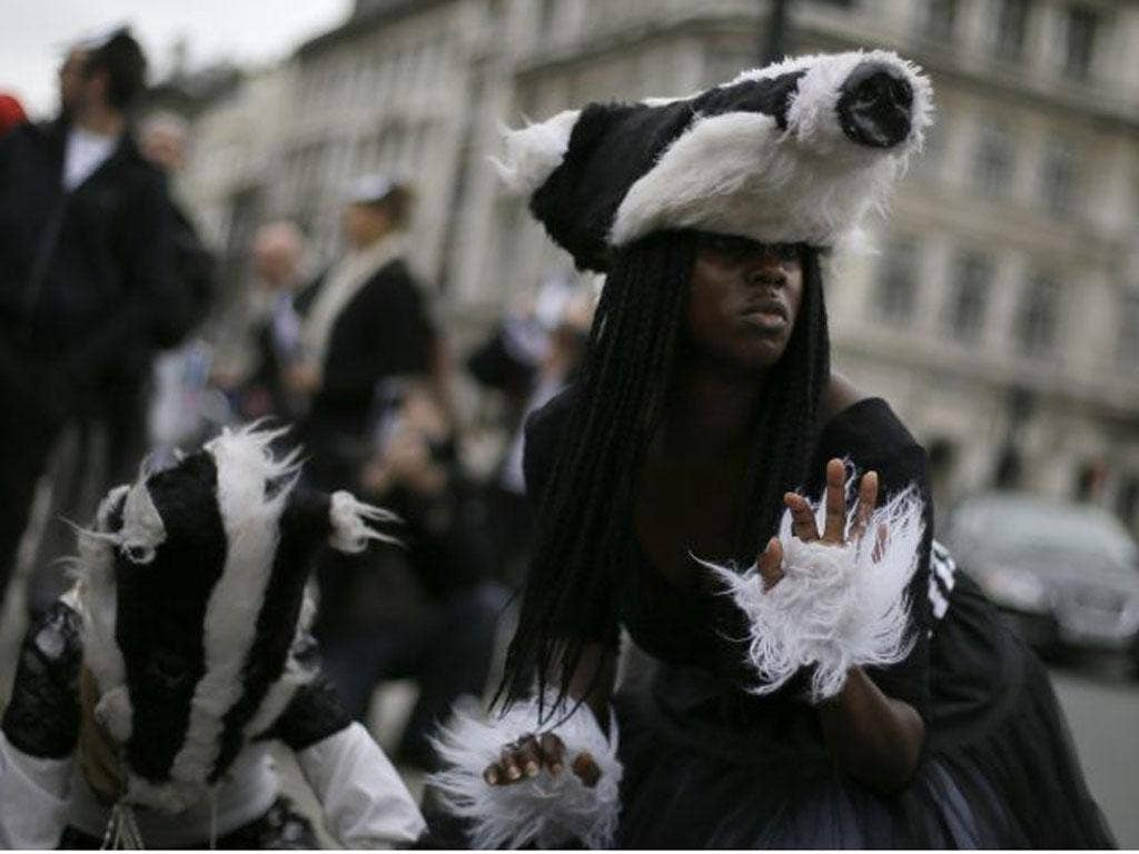 Demonstrators wearing badger costumes dancing in front of the Houses of Parliament yesterday