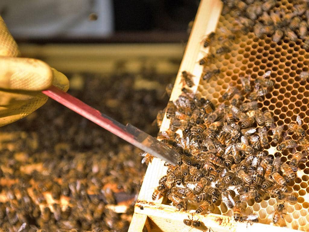 This summer's bad weather is likely to blame for the fall in honey yields