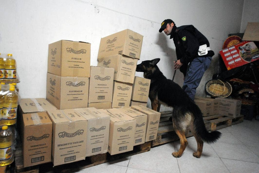 Are sniffer dogs honest? A court is to decide
