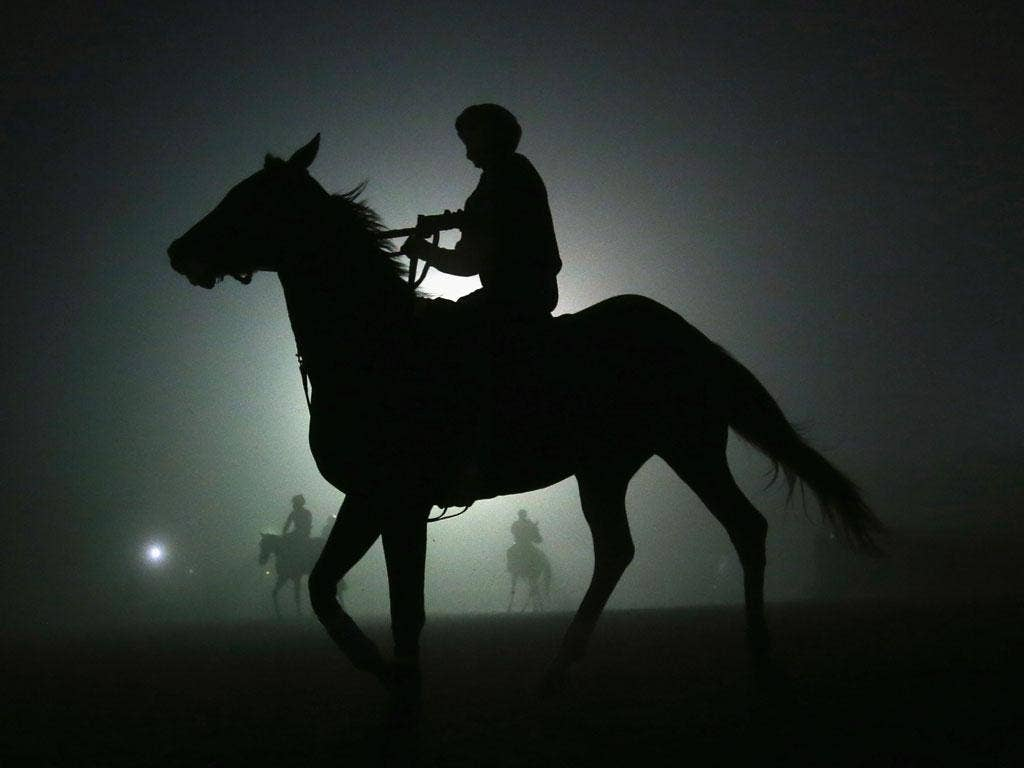 Horses head back to the stable after training in preparation for the Breeders' Cup at Santa Anita, California