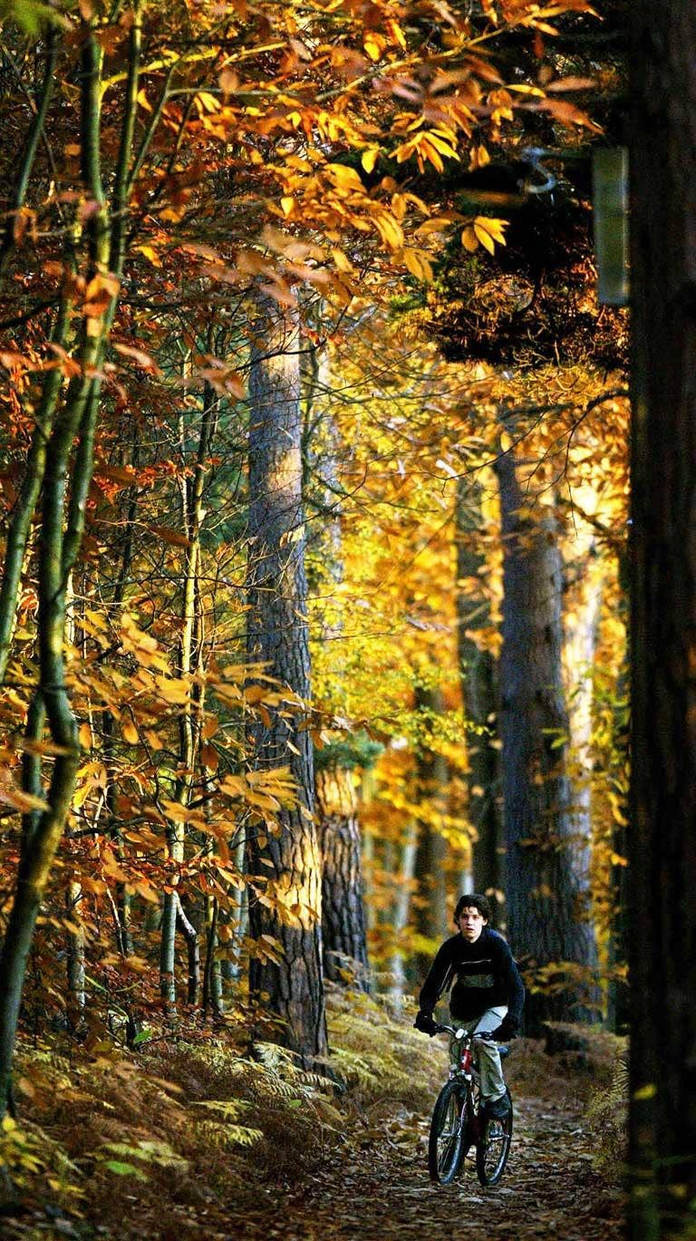 Turning over the leaves of fable: woods near Hartley Wintney, Hampshire