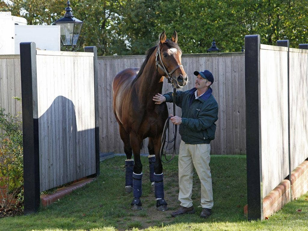 Frankel returns yesterday to his birthplace, Banstead Manor near Newmarket, where he will take up stud duties