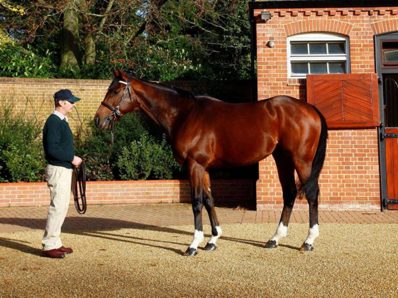 Frankel on show at Banstead Manor Stud, near Newmarket, yesterday