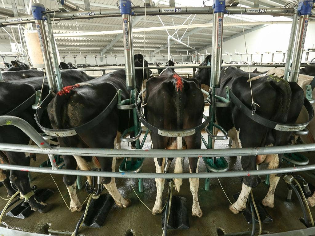 It's never made a big splash on the Stock Exchange but tubing for dairies could milk the market