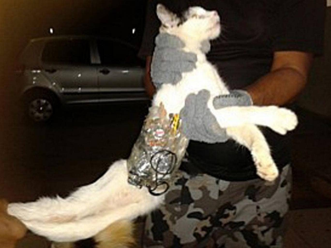 A prison guard holds the cat, which has objects wrapped around his body with tape at the prison in Arapiraca