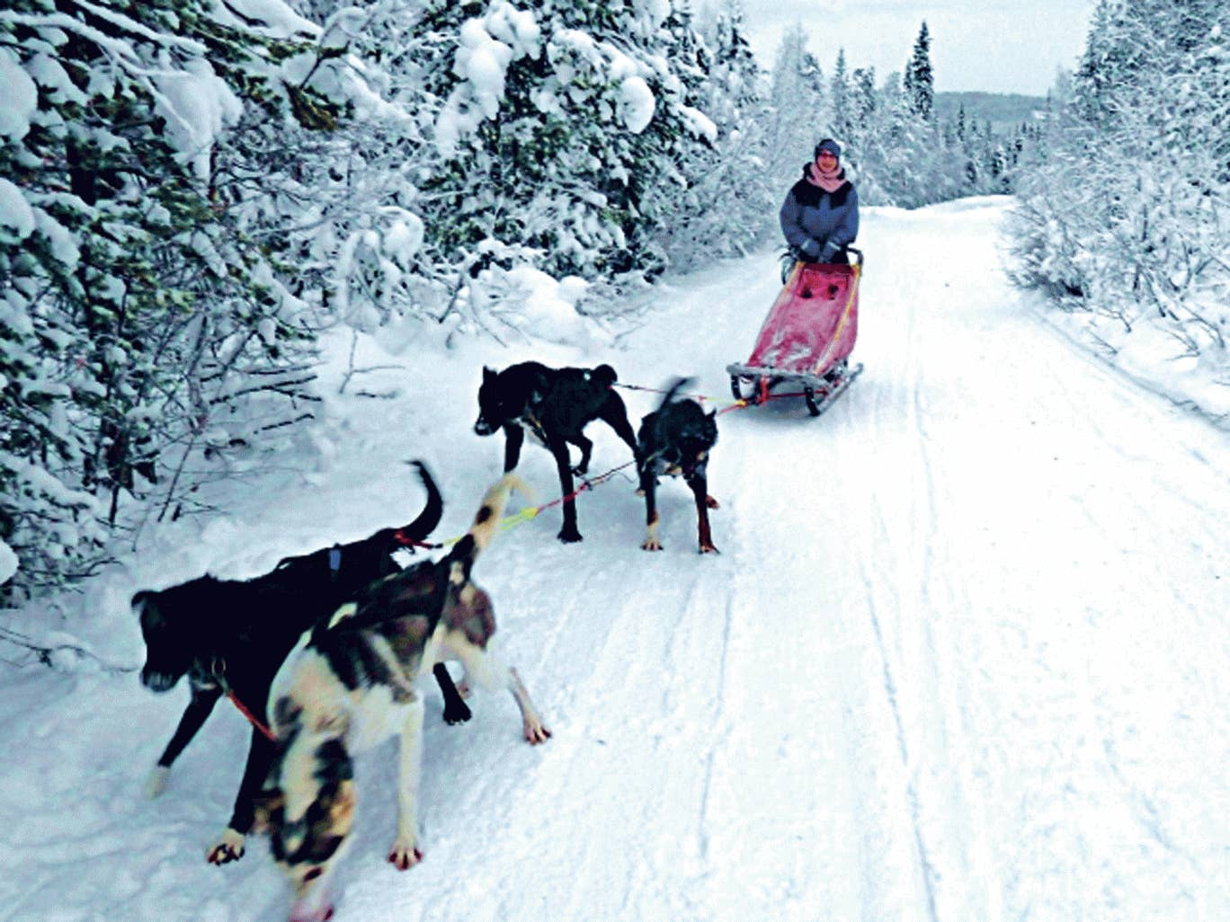 Katie Grant takes control of her pack in the forest
