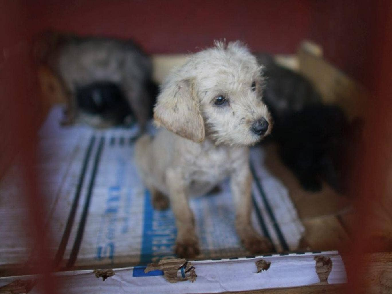 A litter of puppies that was caught near the site of fatal mauling at a  dog pound in Mexico City