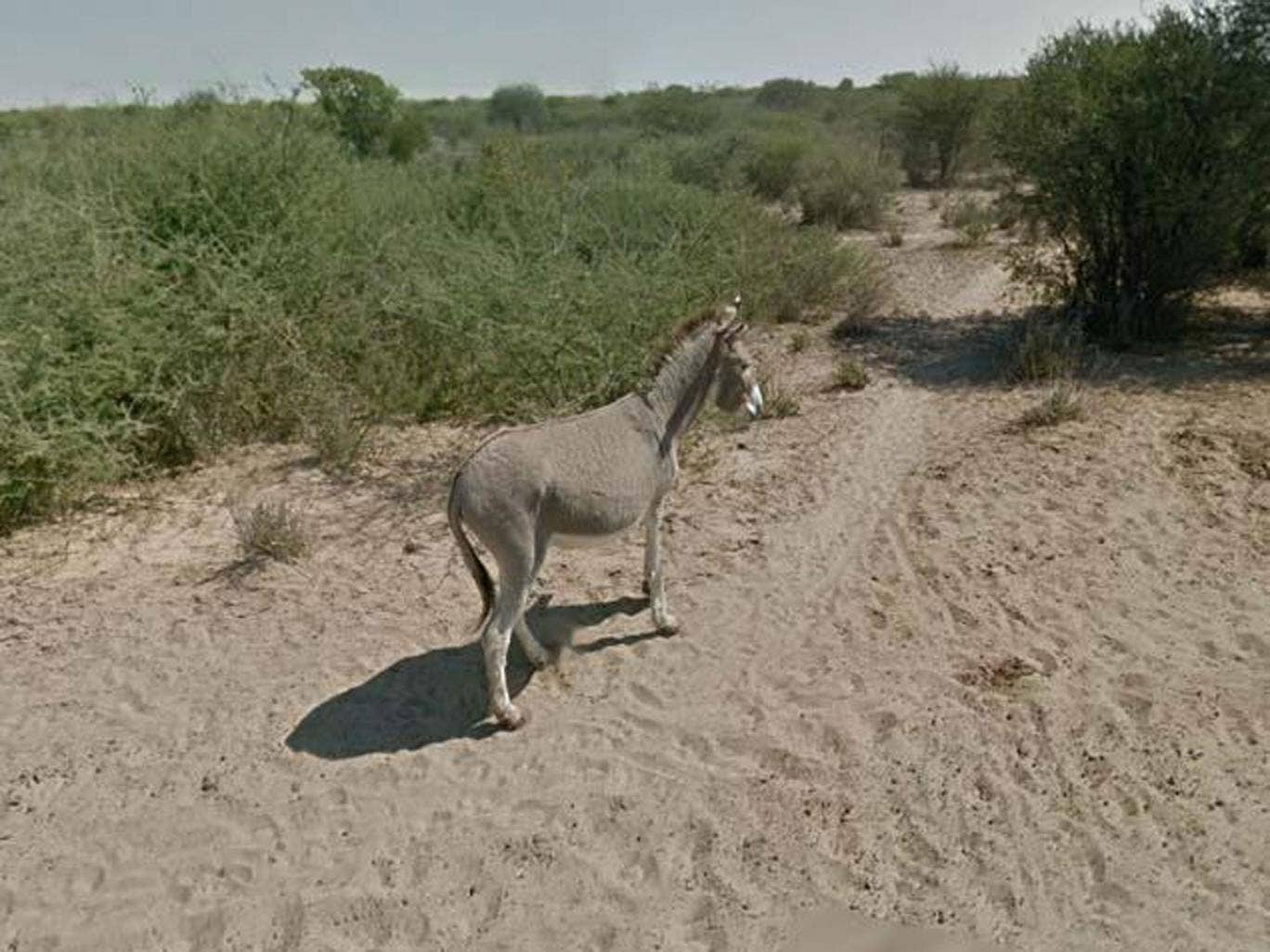 Google has managed to prove that its Street View team did not run over the donkey in Botswana