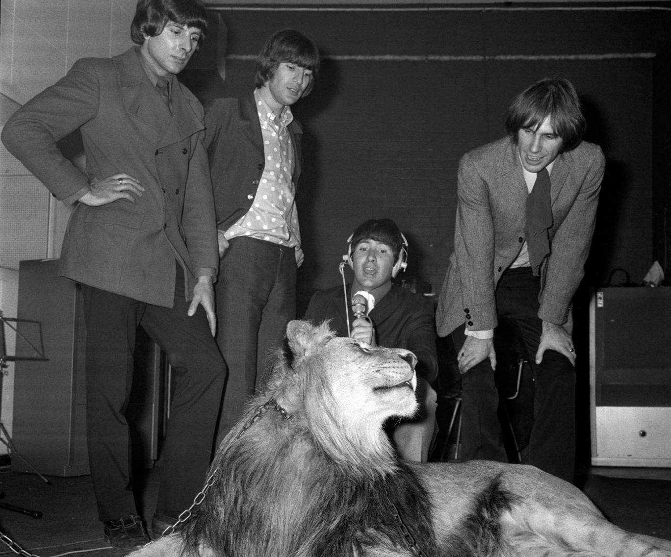 The Troggs (from left to right) Peter Staples, Ronnie Bond, Reg Presley and Chris Britton using a real lion called Marquess to provide suitable noise during the recording of their single The Lion