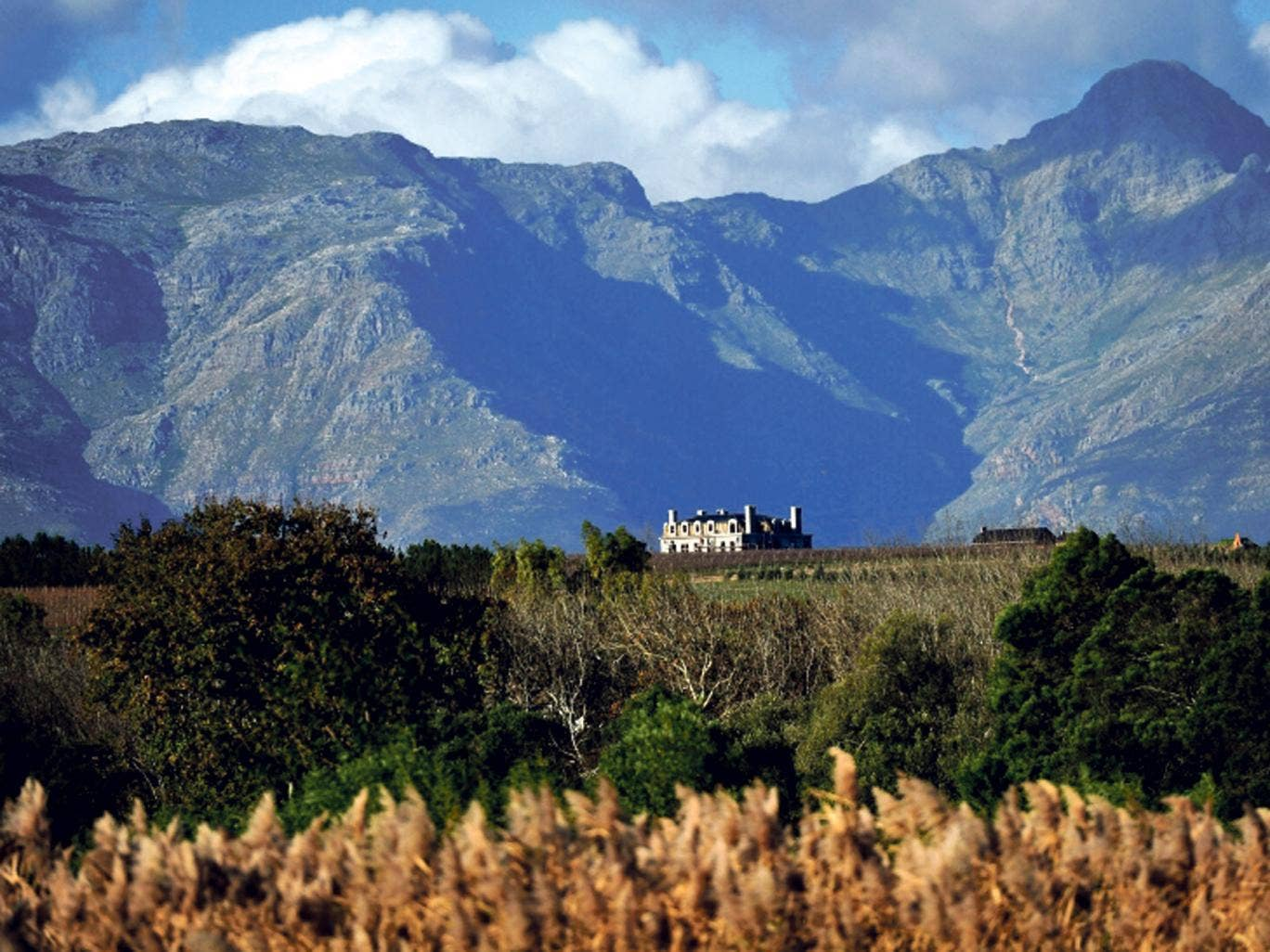 Vintage view: the winelands of Stellenbosch in South Africa