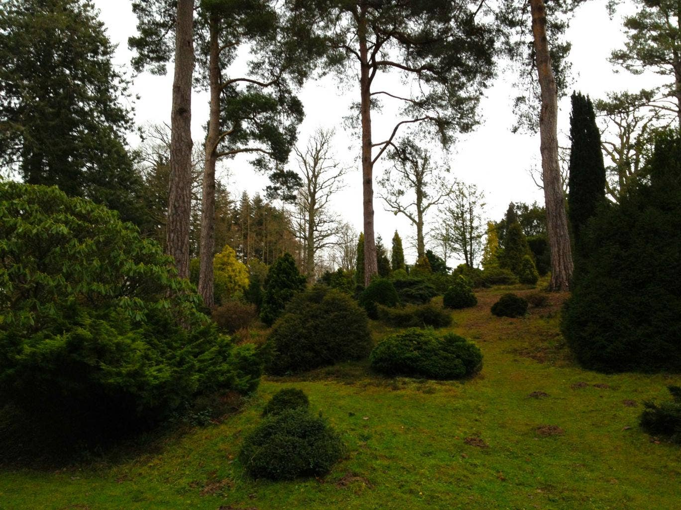 Green world: Bedgebury National Pinetum in Kent
