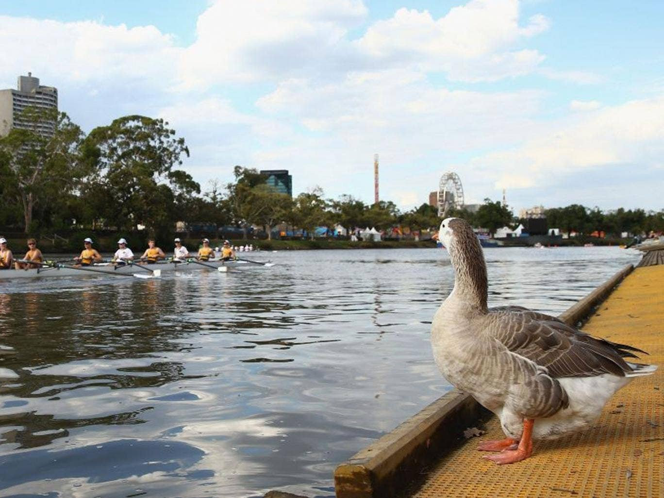 Rowing on Melbourne's Yarra River