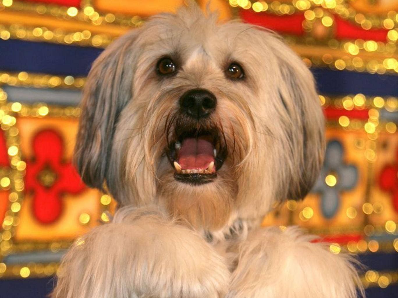Pudsey: Anyone who can convince Simon Cowell that they're the most talented mammal in Britain is a very good doggy indeed.