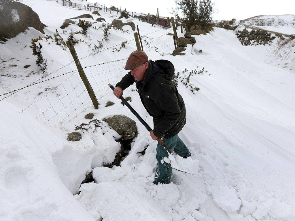 Farmer Gareth Wyn Jones begins digging through 8 feet of snow after one of his sheepdogs, Cap, picked up the scent of a sheep that had been trapped for four days beneath snow on his farm in Llanfairfechan, North Wales