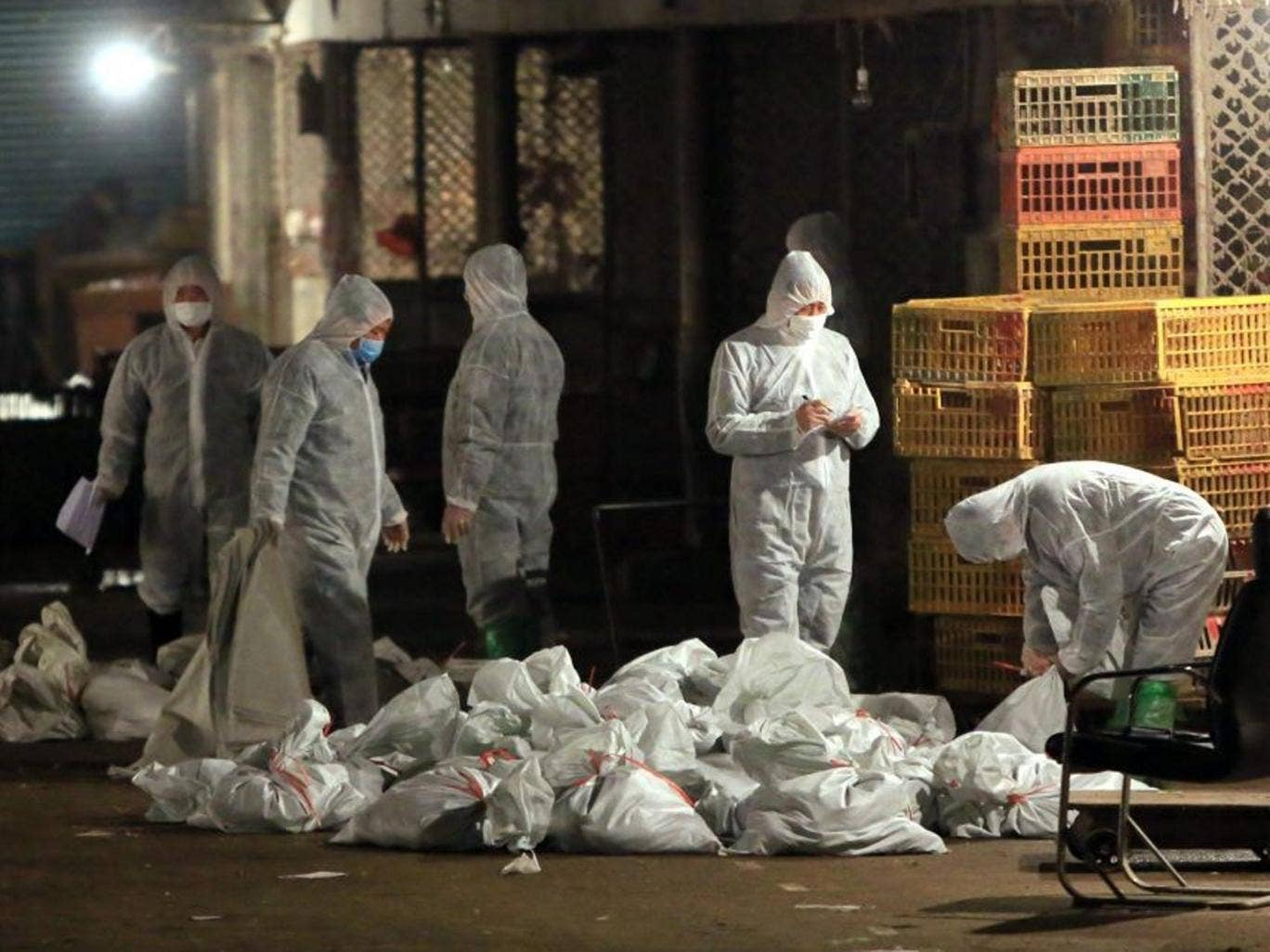 Chinese health workers collect bags of dead chickens at Huhuai wholesale agricultural market in Shanghai