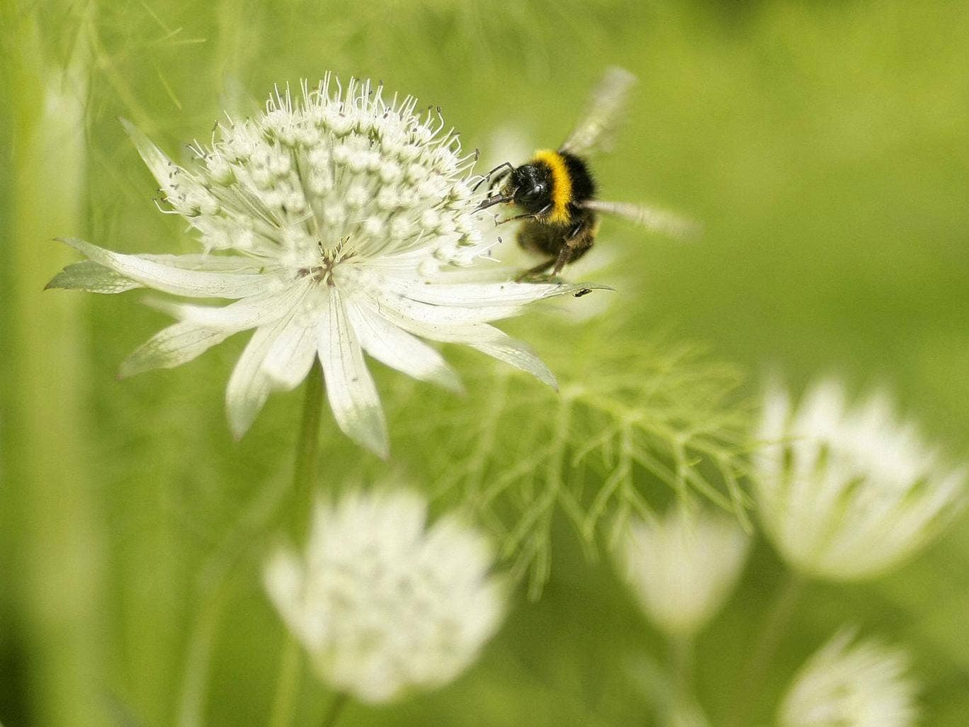 Natural cycle: bees are tireless, vital pollinators