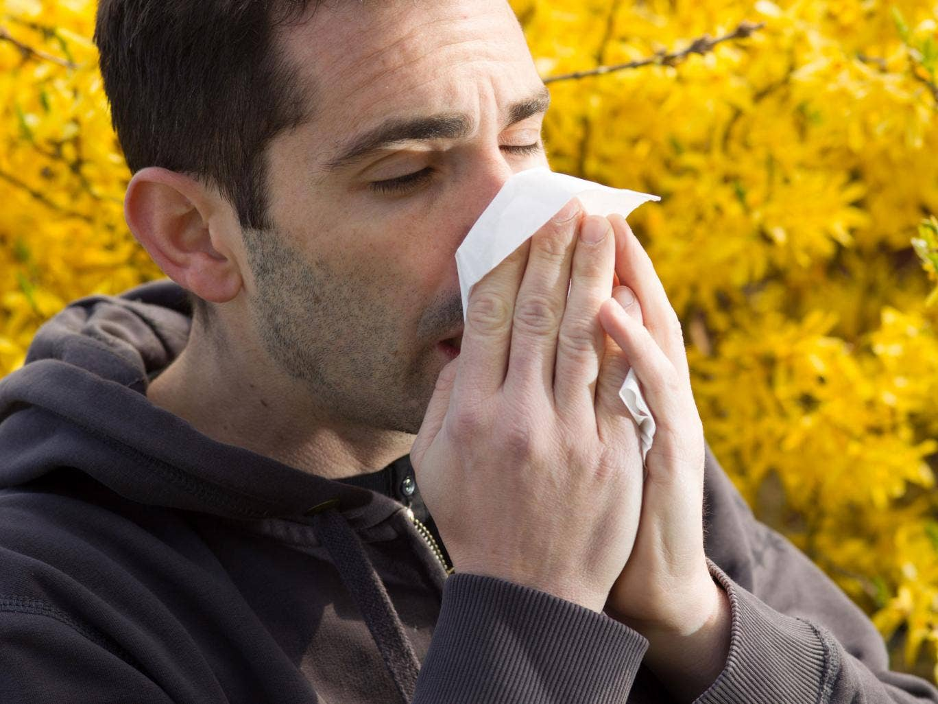 The UK is on alert for severe hay fever outbreaks with pollen levels rising due to a late Spring