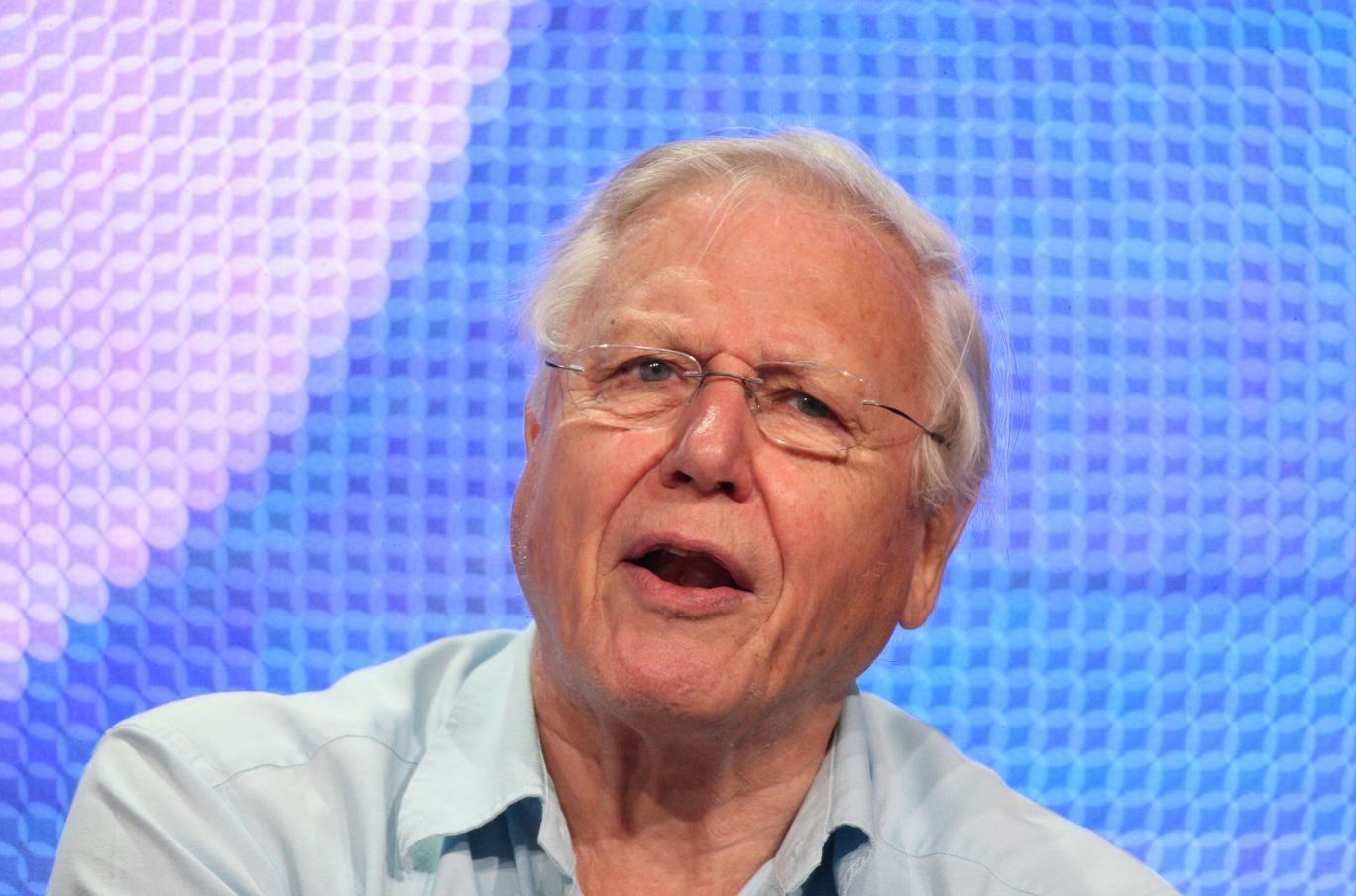 Sir David Attenborough is to present Tweet Of The Day on Radio 4