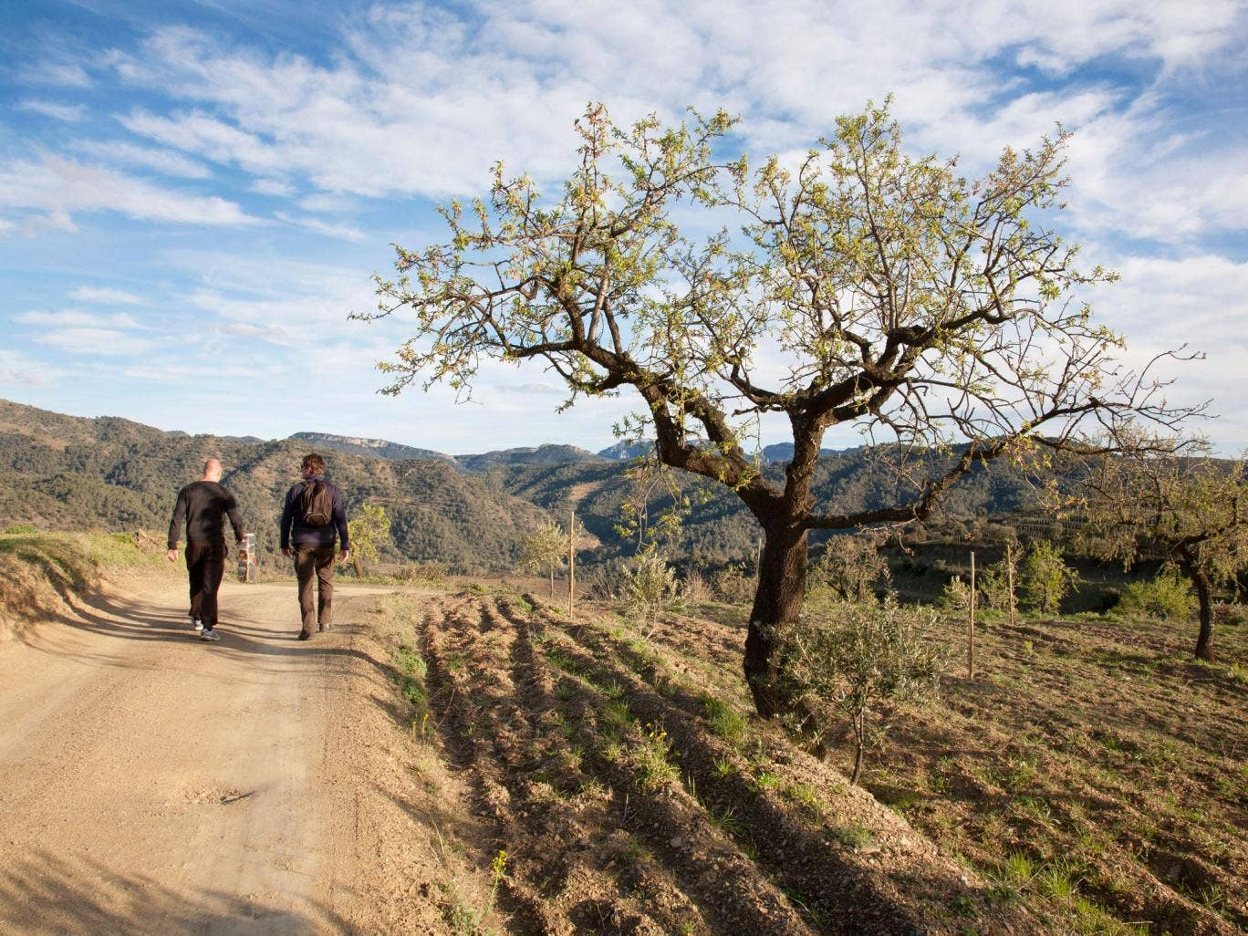 The hills and valleys of Priorat in Spain