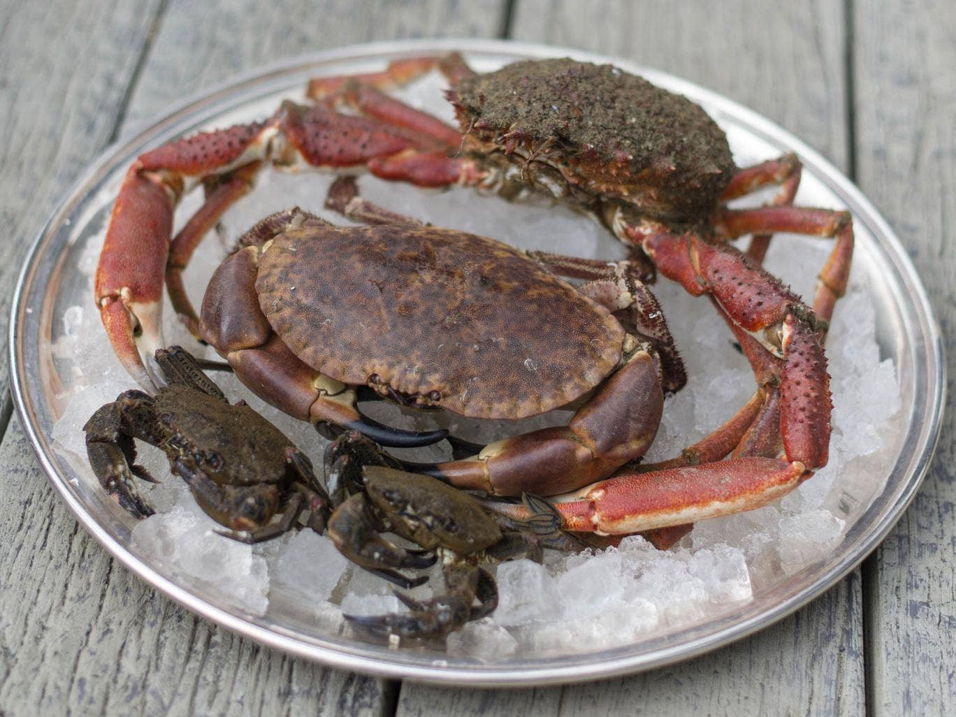 Heaven and shell: spider, Mudeford and brown crabs at the Jetty Restaurant at Mudeford in Dorset